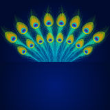 Vector peacock feathers on blue background. Stock Photos