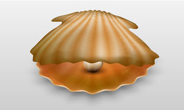 Vector pearl in shell Stock Photo