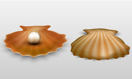 Vector pearl in shell Royalty Free Stock Photos