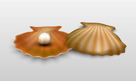 Vector pearl in shell Stock Photography