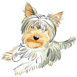 Vector Pedigreed dog Yorkshire terrier. Color sketch Yorkshire terrier red and black stands on its hind legs Stock Photo