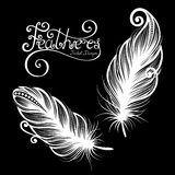 Vector Peerless Decorative Feather Royalty Free Stock Photo