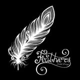 Vector Peerless Decorative Feather Royalty Free Stock Images