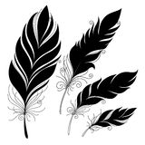 Vector Peerless Decorative Feather Stock Image