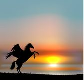 Vector pegasus on sunset sky Royalty Free Stock Photos