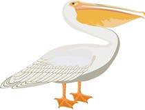 Vector pelican illustration on white Stock Photos