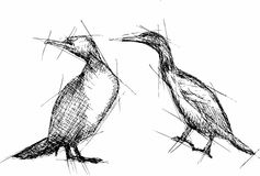 Vector Pen Drawing del cormorán Imagen de archivo libre de regalías