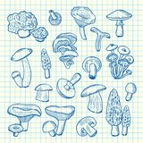 Vector hand drawn mushrooms on cell sheet illustration. Vector pen hand drawn mushrooms isolated on cell sheet illustration Stock Images
