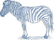 Vector pen sketch of a zebra Royalty Free Stock Photo