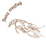 Vector pencil hand drawn illustration of crayfish with label Royalty Free Stock Image
