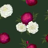Vector peonies. Seamless pattern of white and burgundy flowers. Bouquets of flowers on a dark green background. Template for vector illustration