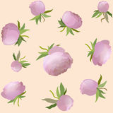 Vector peony floral seamless pattern. Pink cute flower illustration Royalty Free Stock Photos