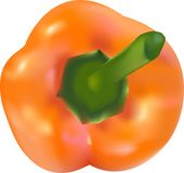 Vector pepper Royalty Free Stock Photography