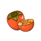 Vector persimmon illustration on white background Stock Image