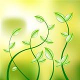 Vector petals Stock Photo