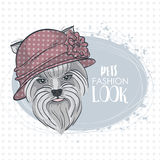 Vector pets fashion look Stock Images