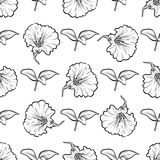 Vector petunya seamless pattern of flowers. And leaves isolated on white background Stock Photo
