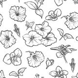 Vector petunya seamless pattern of flowers. Vector sketch art, hand drawn petunya seamless pattern of flowers and leaves isolated Royalty Free Stock Image