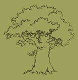 Vector picture. Old oak Royalty Free Stock Photo