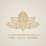 Vector pine cone emblem. Outline leaves Royalty Free Stock Photos