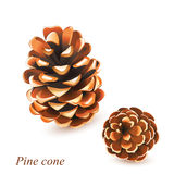 Vector Pine cones isolated on white. The vector Pine cones isolated on white Royalty Free Stock Photo