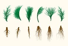 Vector Pine Tree Branches and Roots Set Illustration. Vintage Style Royalty Free Stock Photos