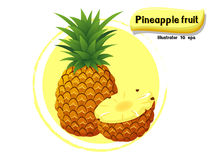 Vector Pineapple fruit isolated on color background,illustrator 10 eps Royalty Free Stock Photography