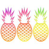 Vector pineapple tropical fruit outline set with gradients Stock Photo
