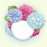 Vector of  pink, blue and violet hydrangea background Stock Images