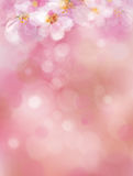 Vector  pink, bokeh background. Royalty Free Stock Photography