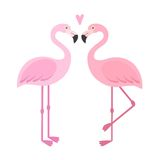 Vector pink flamingos illustration. Stock Photography