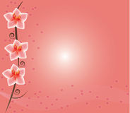Vector Pink Flower Stock Photo