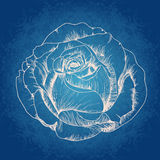 Vector pink rose. Vector illustration with rose on blue background Royalty Free Stock Photography