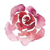Vector pink rose watercolor hand-painted, isolated on white, valentine. Pink rose watercolor hand-painted, isolated on white Stock Photography