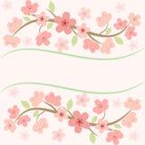 Pink sakura blossom card Stock Photo