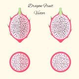 Vector pitahaya exotic fruit set in flat style isolated Stock Photography