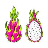 Vector pitaya, dragon fruit. Royalty Free Stock Photo