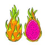 Vector pitaya, dragon fruit. Stock Photography