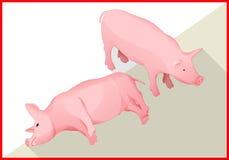 Vector plano isométrico 3d del cerdo Imagenes de archivo