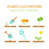 Vector plant cultivation. Sowing and planting process infographic design. Flat argiculture collection. Vector plant cultivation. Growing plant illustration Stock Photography