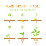 Vector plant growth stages. Planting process infographic design. Flat argiculture collection. Royalty Free Stock Photos