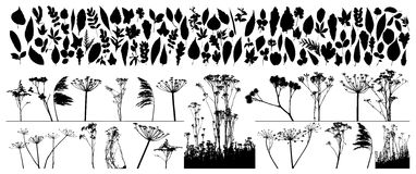 Free Vector Plants And Leafs Stock Photography - 9873102