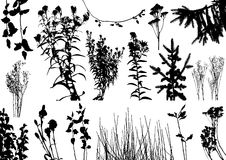 Vector plants silhouettes Stock Photo