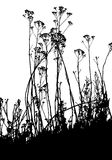 Vector plants silhouettes Royalty Free Stock Images