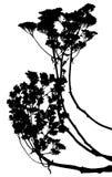 Vector plants silhouettes Stock Photos