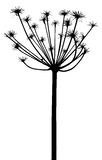 Vector plants silhouettes Royalty Free Stock Photo