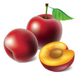 Vector plums Royalty Free Stock Images