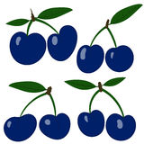 Vector plums. Collection blue plum fruits Royalty Free Stock Photography