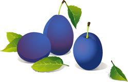 Vector plums Stock Photography
