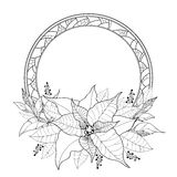 Vector Poinsettia or Christmas Star, leaves and ornate round frame isolated on white. Outline Poinsettia flower for winter design. Stock Photos